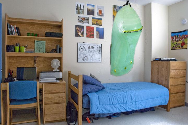 Roommate Still in Chrysalis Stage of Metamorphosis