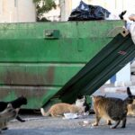 Cornell's Stray Cats Enter Week Three Of Vicious Turf War Over D.P. Dough Dumpster